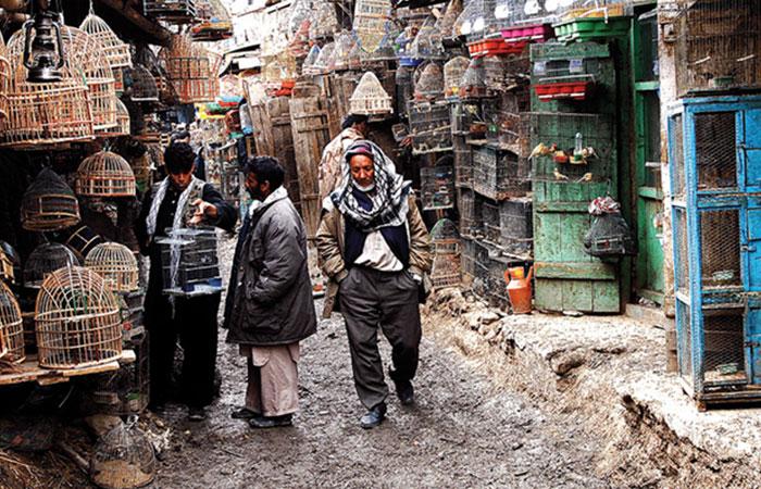 Ka Faroshi Bird Market
